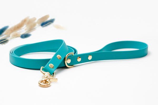 regular leash